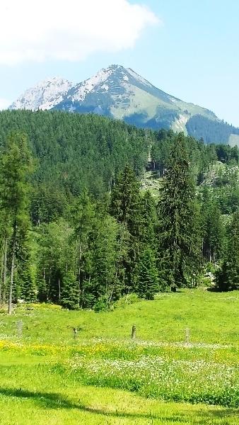 Wälder oder die grüne Steiermark!