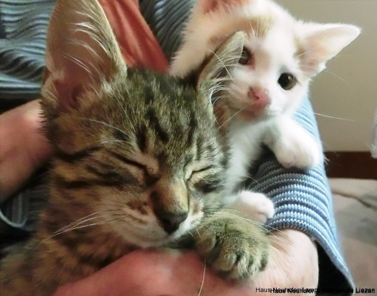 Lucky und Kitty-1